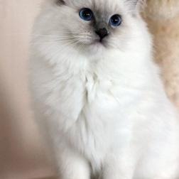 Everdream cat posing like nothing happened